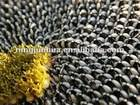 new crop sunflower seeds 5009 24/64