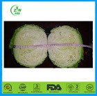 2014 fresh cabbage for sale