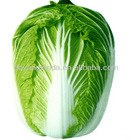 fresh Chinese cabbage long