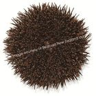 New Zealand Sea Urchin