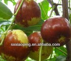 2013 Chinese red big size fresh dates